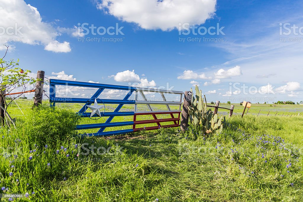 bluebonnet field in countryside  of Ennis, Texas. stock photo