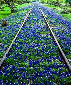 Bluebonnet wildflowers and old railroad track near Llano Texas