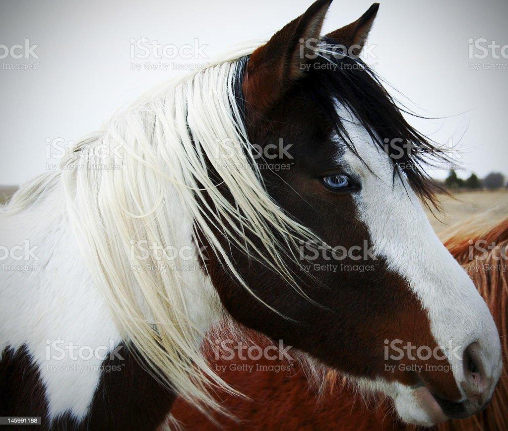 Blue-eyed horse royalty-free stock photo