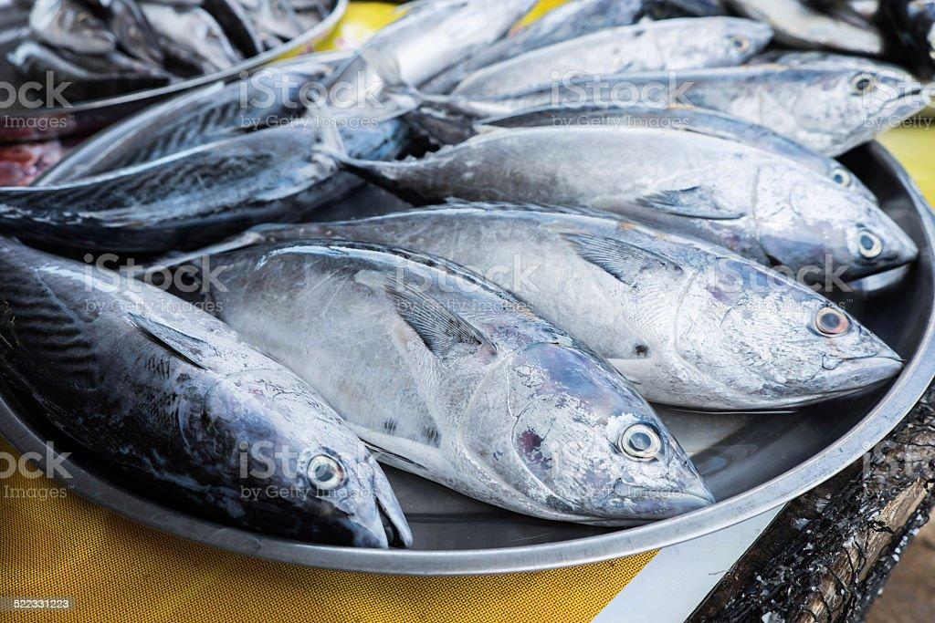 bluefin tuna fish in the market stock photo