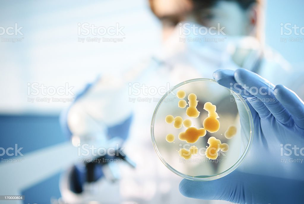 Blue-gloved scientist holding a petri dish stock photo