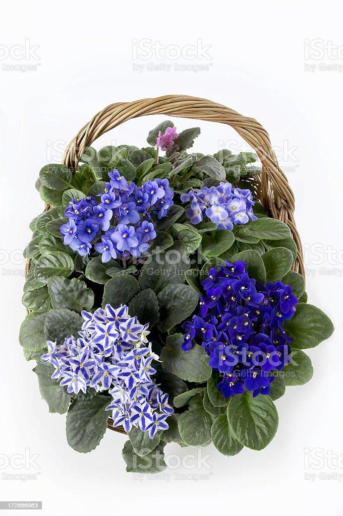 Bluish violet basket stock photo
