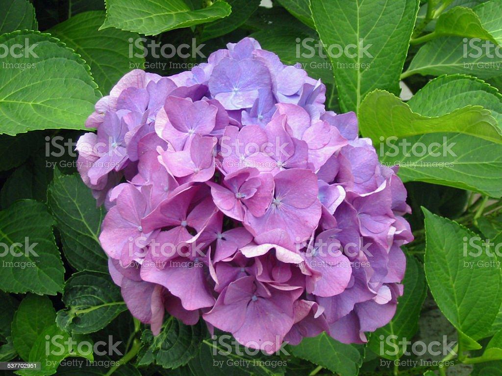 Blume stock photo