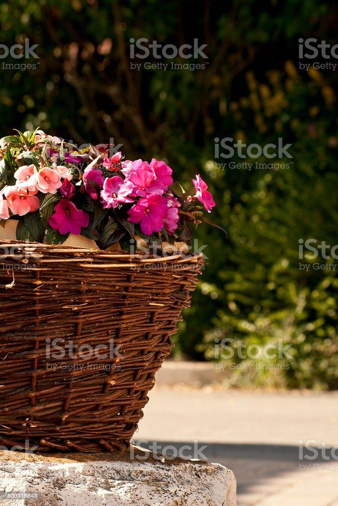Blumen Korb stock photo