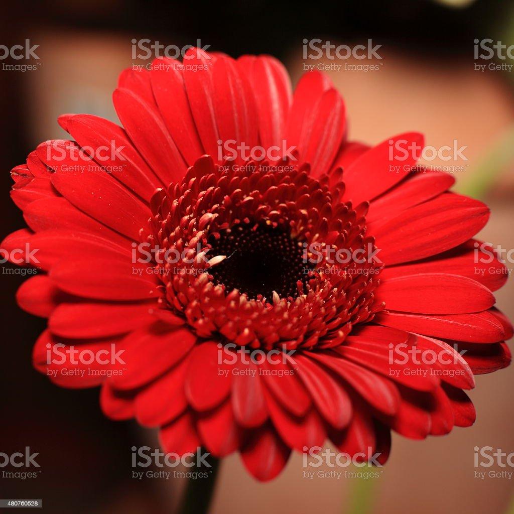 Blumen stock photo