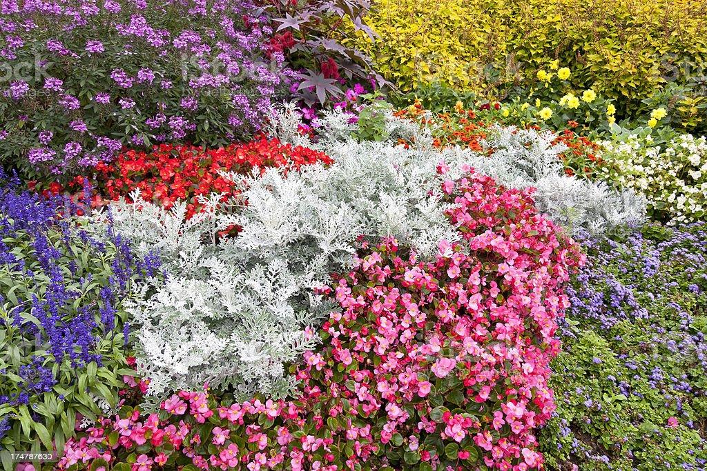 Blumengarten, Flowers in the garden royalty-free stock photo