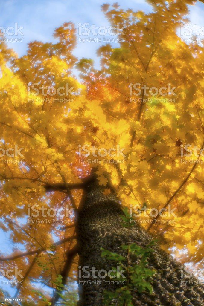 Blur autumn tree royalty-free stock photo