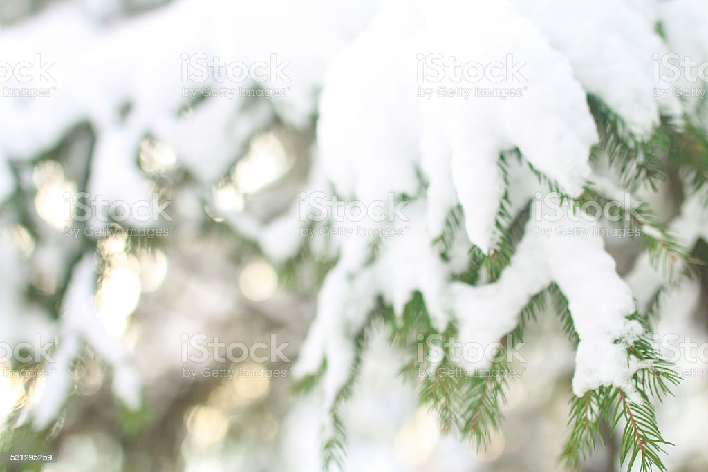Blur background with snow-covered fir tree stock photo
