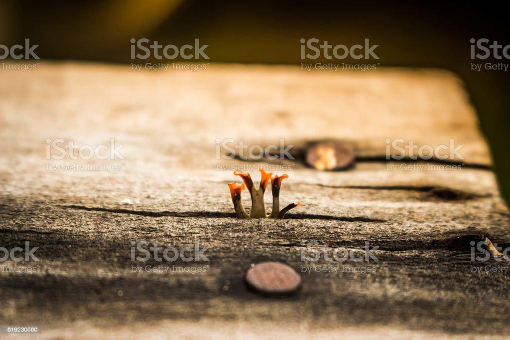 blur Bracket fungus growing from dead tree. stock photo