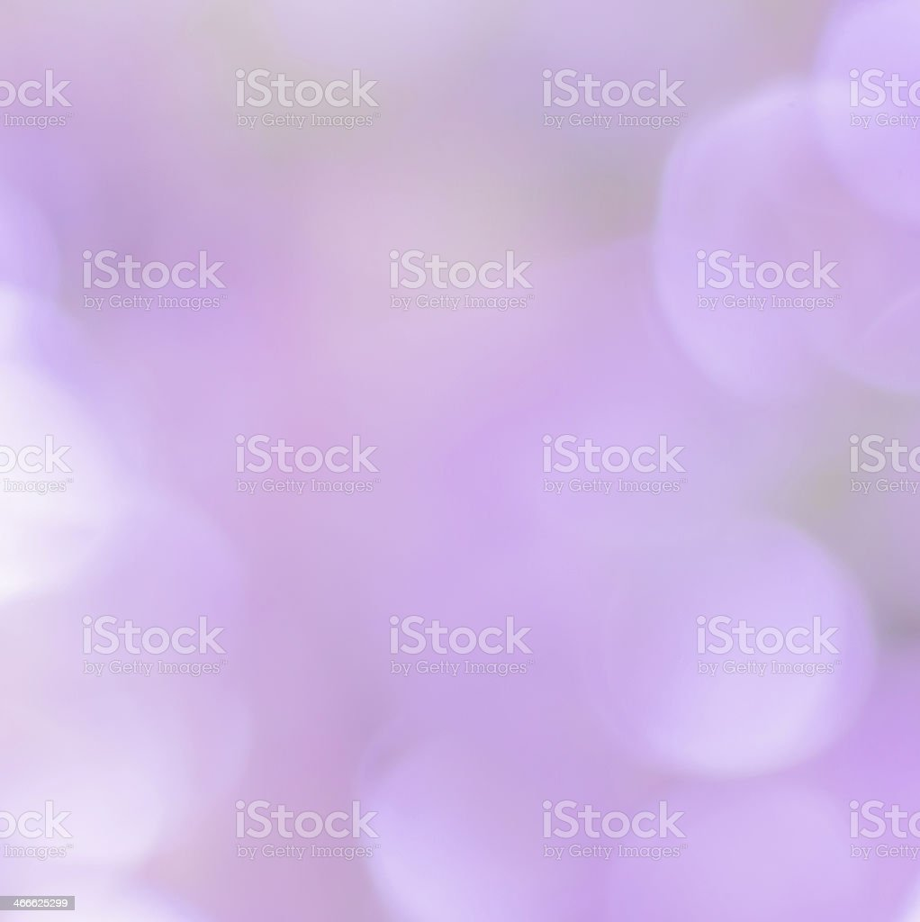 blur colorful background in violet stock photo