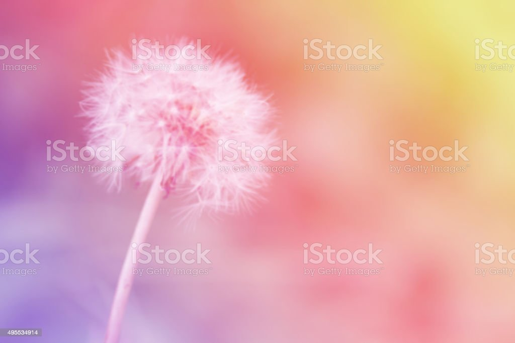 Blur dandelion on the abstract colorful background. stock photo