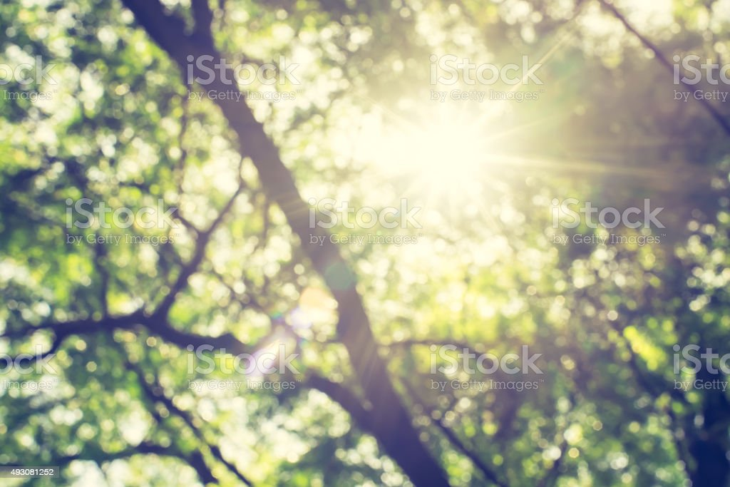 Blur : Looking up at green tree with sun burst stock photo