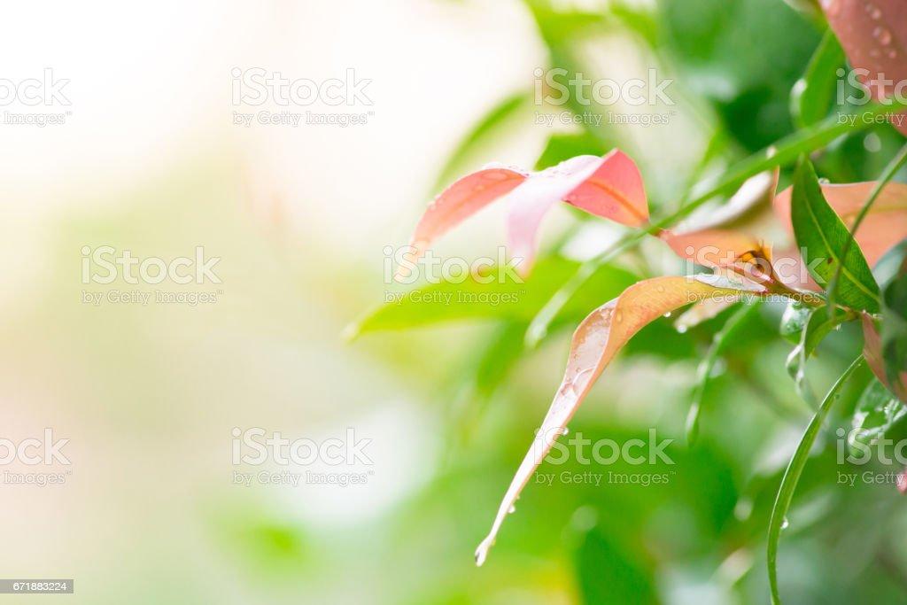 Blur nature background stock photo