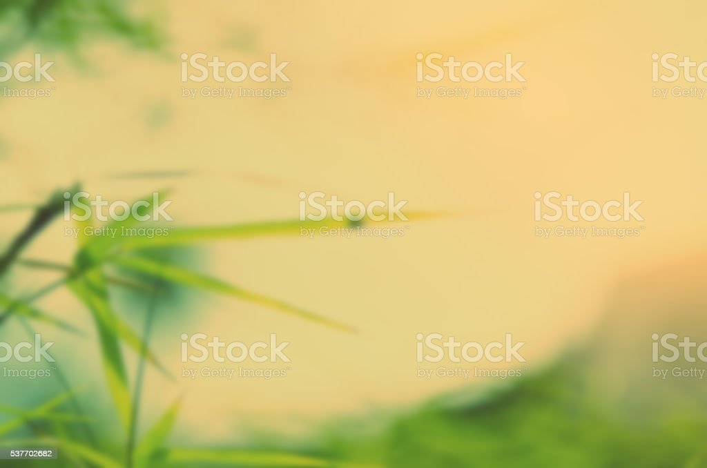 Blur nature green bamboo leaf with sun light stock photo
