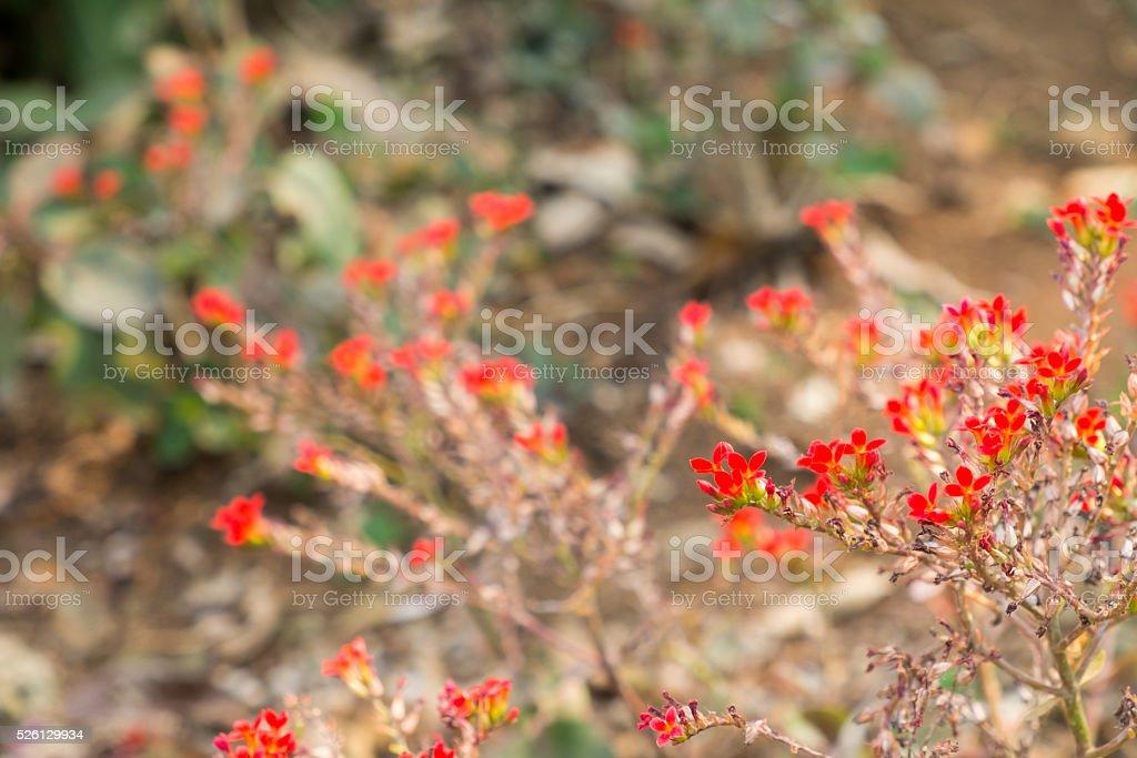 Verwischen zu roten Blumen Lizenzfreies stock-foto