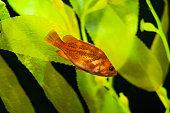 blurred aquarium with orange fish