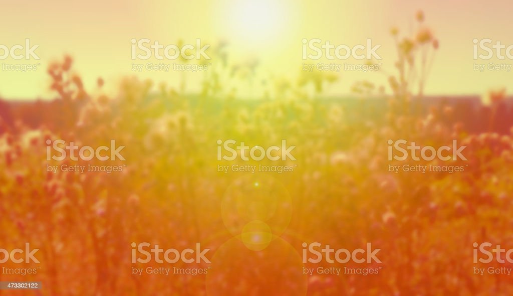 A blurred background of a field in summer with a lens flair stock photo