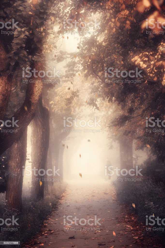 Blurred background of autumn alley in mist soft light. stock photo