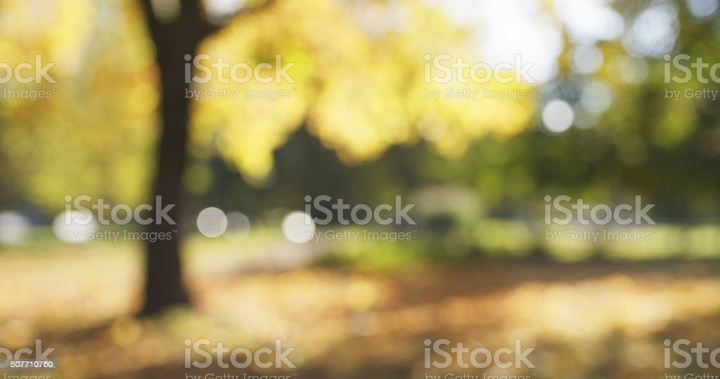 blurred background of autumn park stock photo