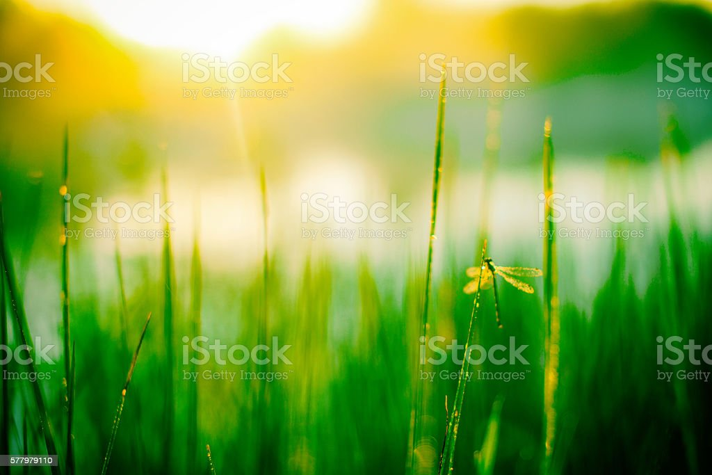 blurred background of grass stock photo