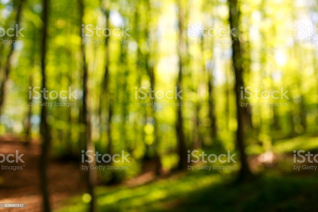 Blurred background of green trees in forest at sunset stock photo
