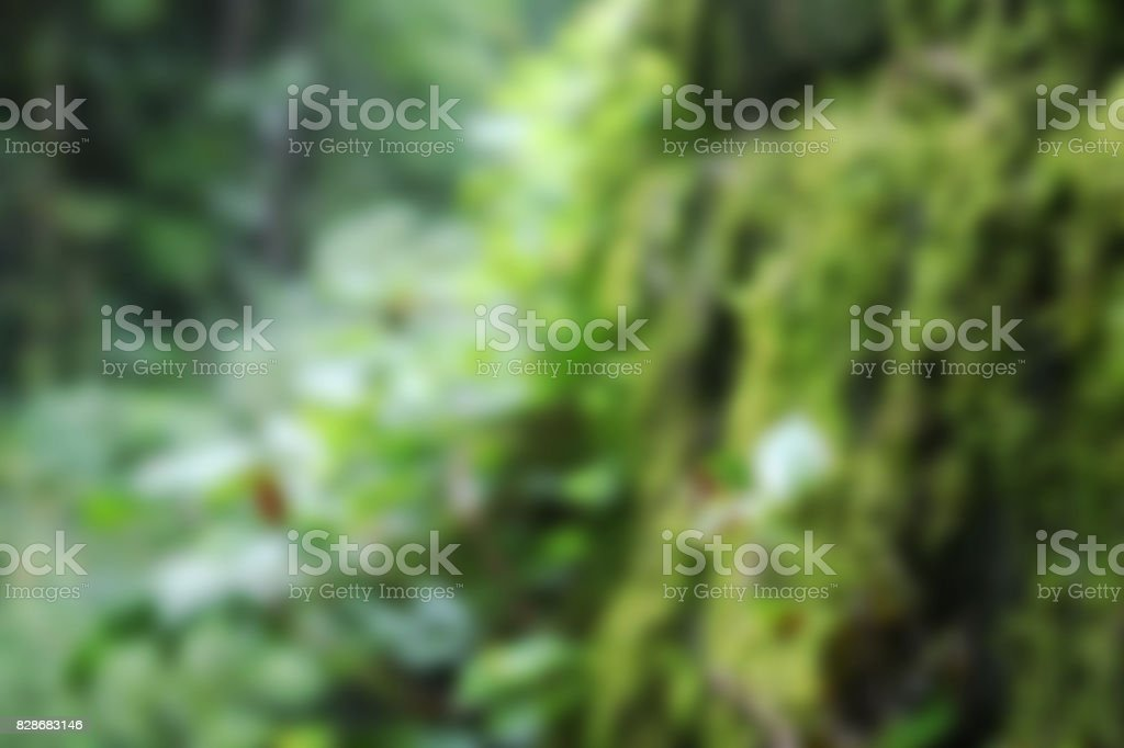 Blurred Background of Moss and Green Plants in the Deep Forrest stock photo