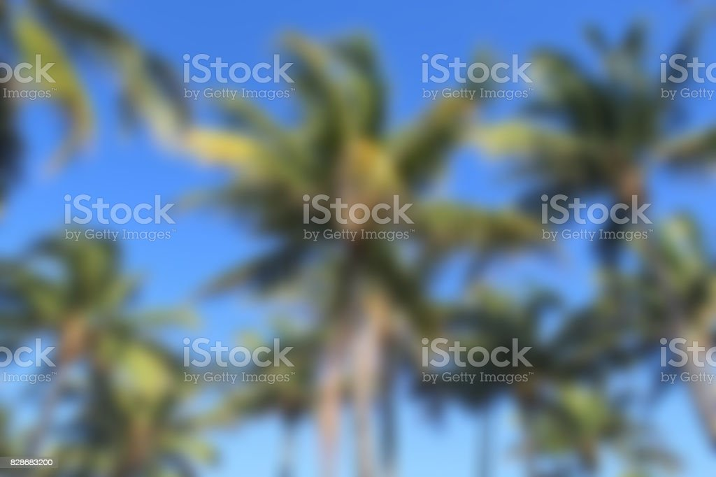 Blurred Background of Palm Trees of Miami stock photo