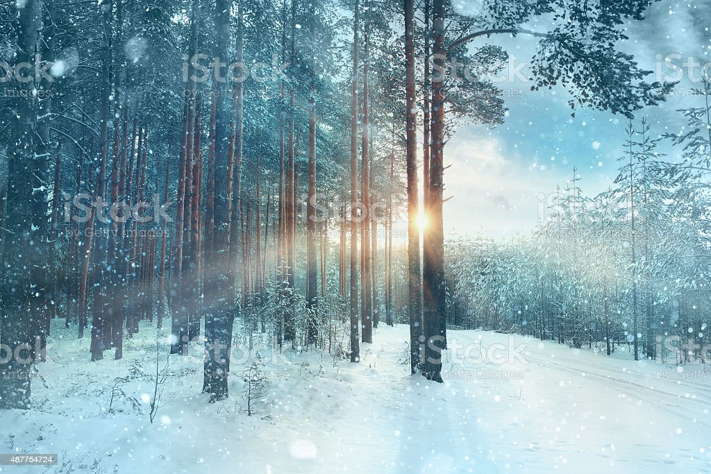 blurred background snowy forest nature park stock photo