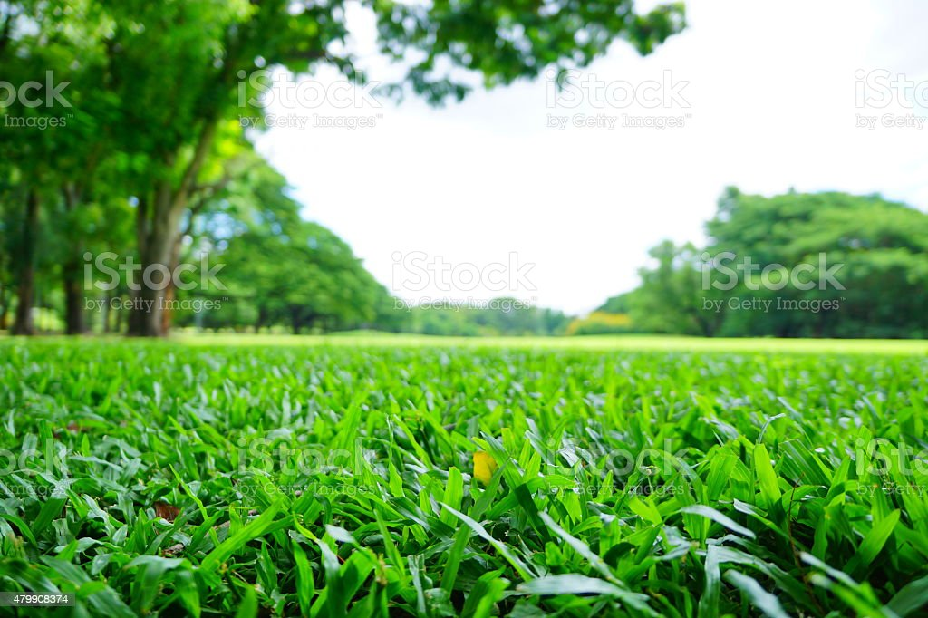 Blurred Backgrounds: Green Lawns and Trees in Green Park stock photo