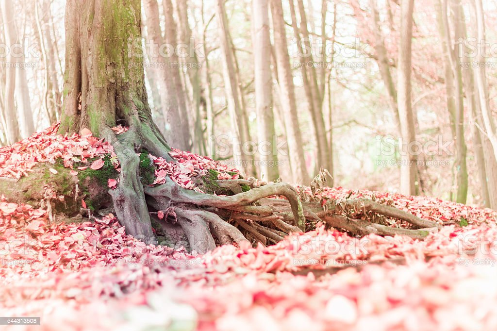 Blurred Fall landscape background stock photo