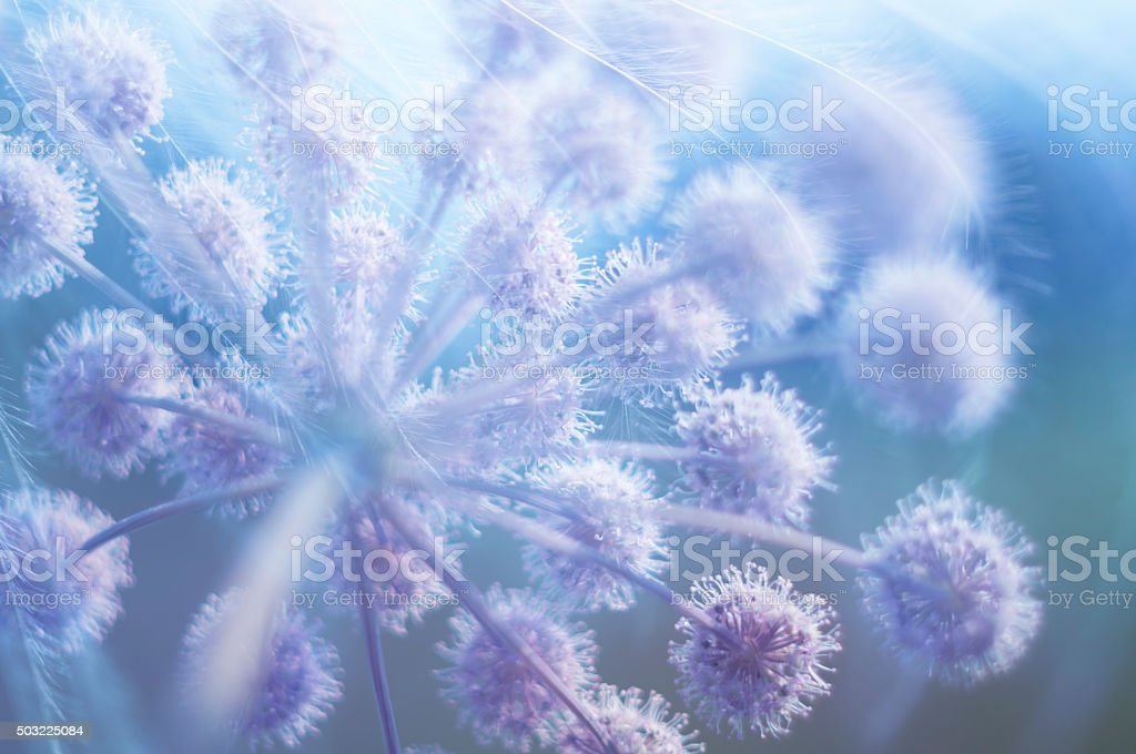 Blurred floral background in blue and pink tones soft light. stock photo