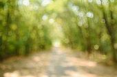 Blurred forest background