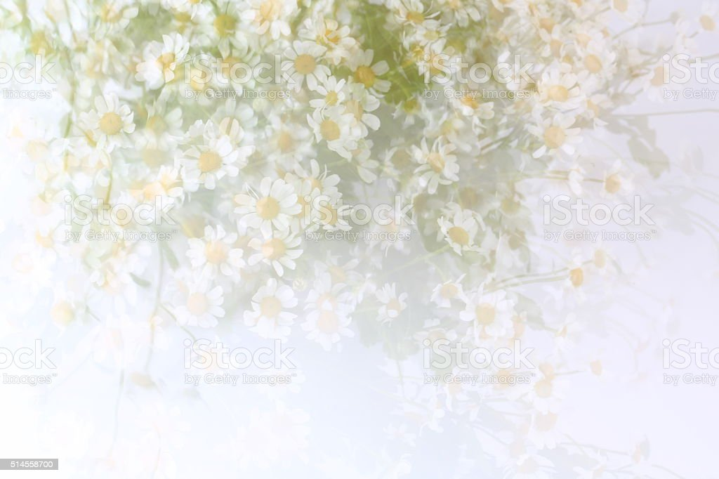 blurred gentle background with daisies spring summer stock photo