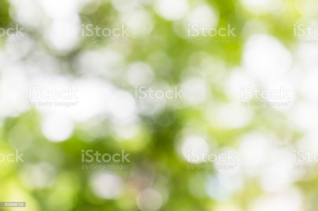 Blurred green-white bokeh background stock photo