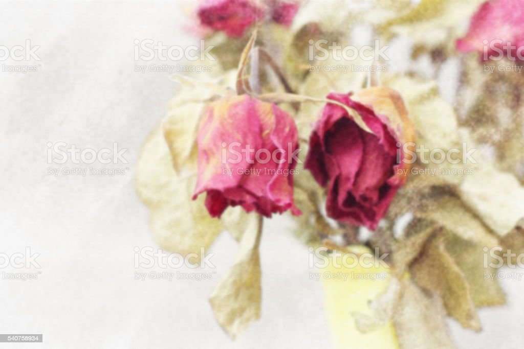 Blurred image of Wither rose, died rose,  watercolor vintage toned. stock photo
