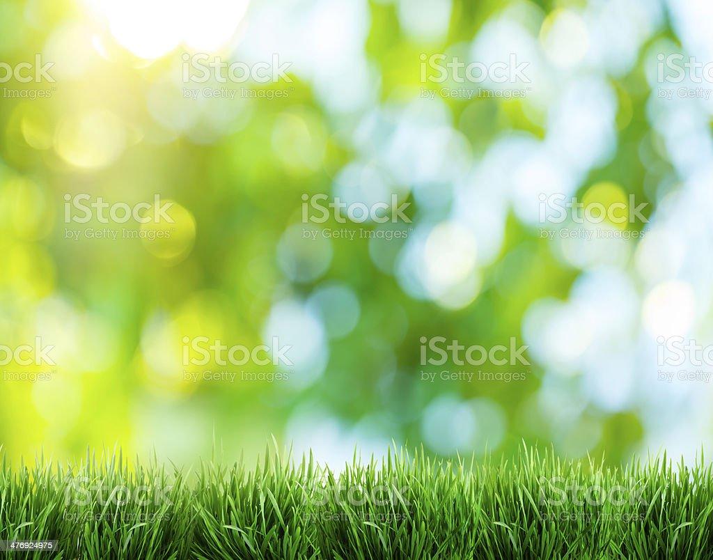 Blurred nature background. stock photo