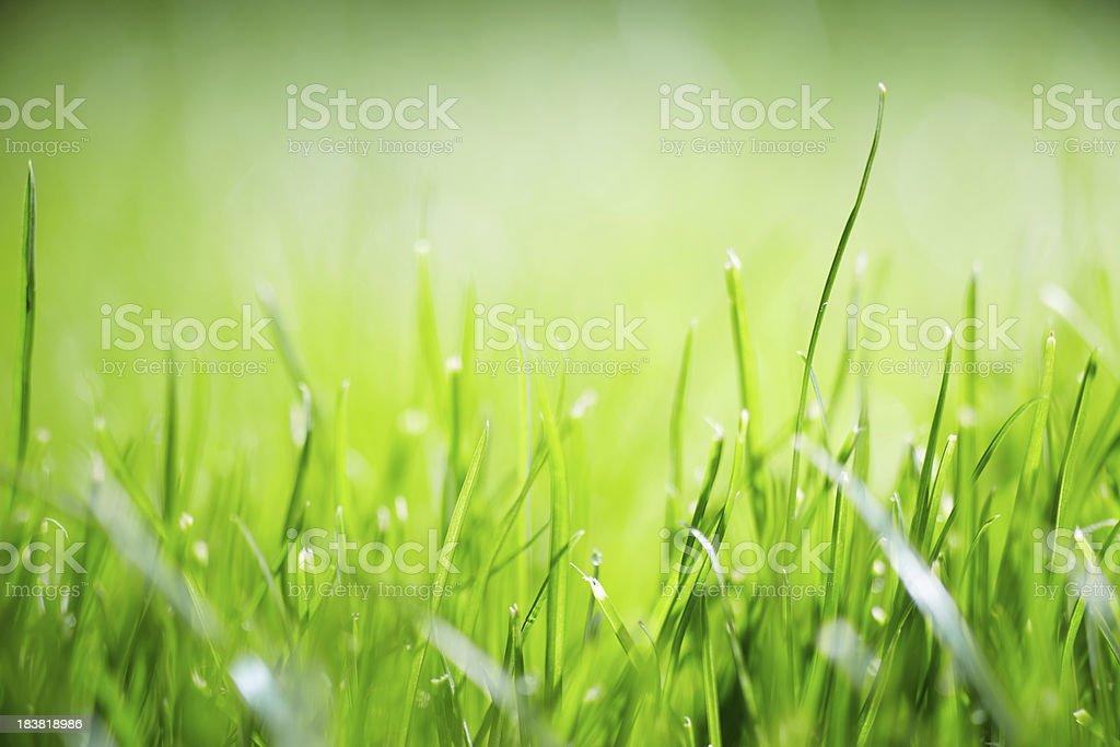 Blurred nature stock photo