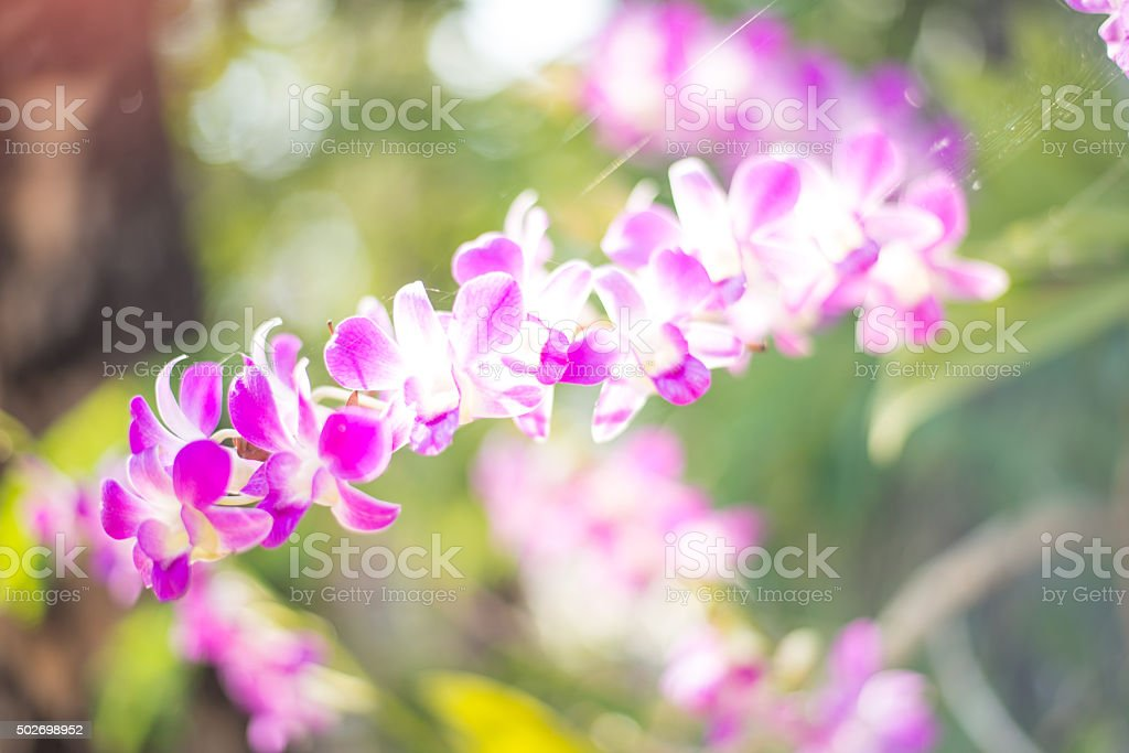 Blurred orchid flower stock photo
