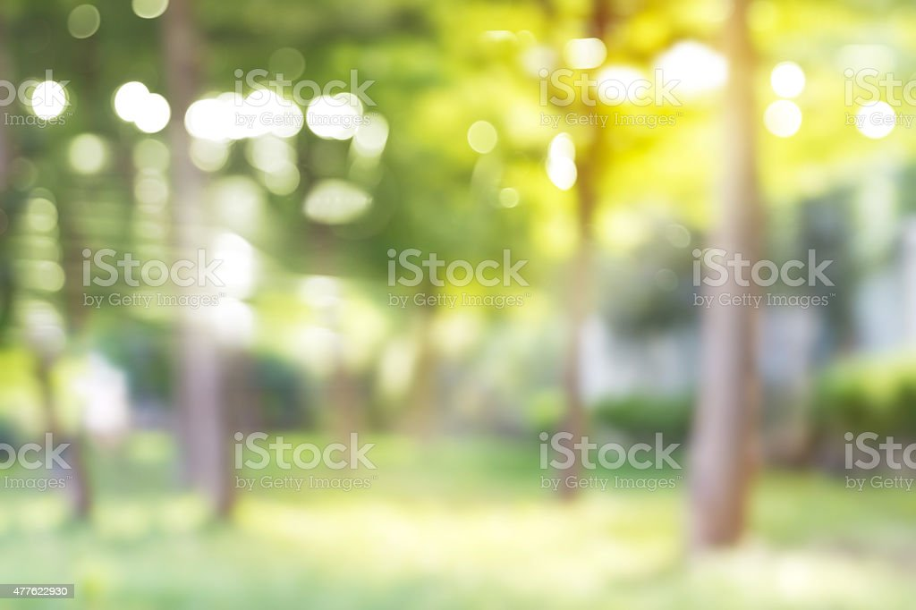 Blurred park, vibrant green natural background stock photo