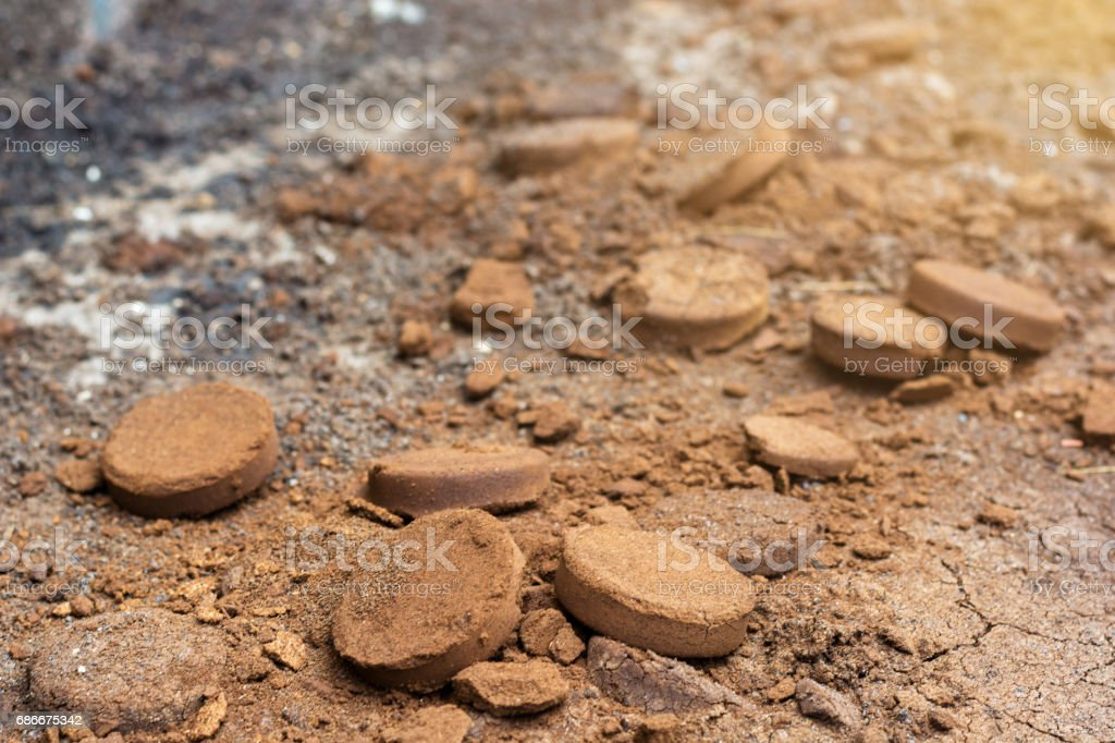 Blurred photo of coffee ground, coffee residue on ground were applied to fertilizers stock photo