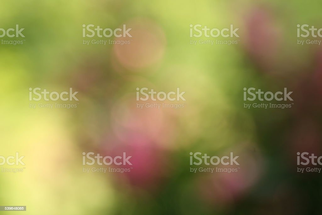 Blurred pink flowers stock photo