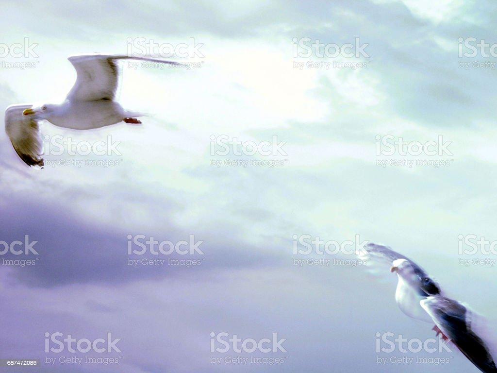 Blurred Seagulls stock photo