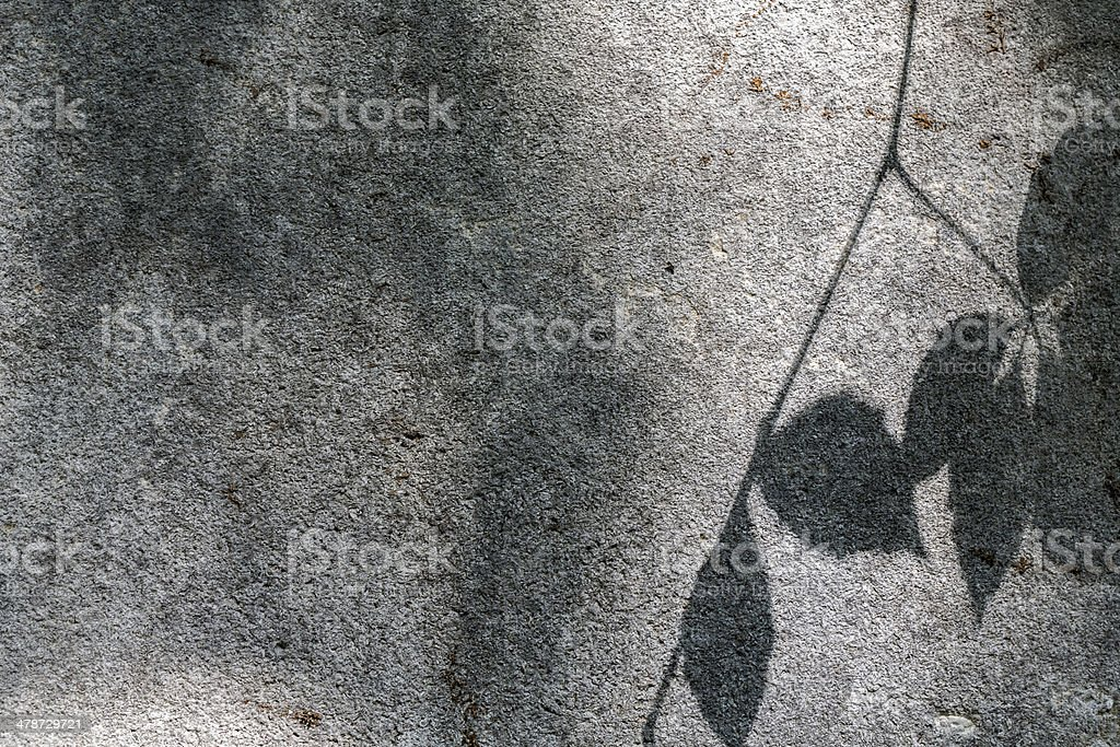 blurred shadow of some leafs on a grey wall stock photo