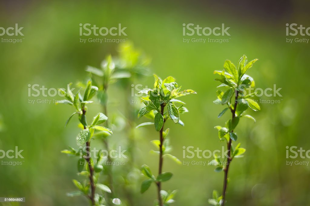 blurred spring background stock photo