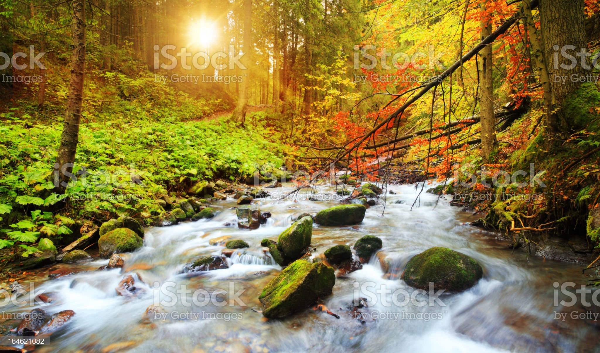 Blurred Stream Flowing Through the Woods During Fall royalty-free stock photo