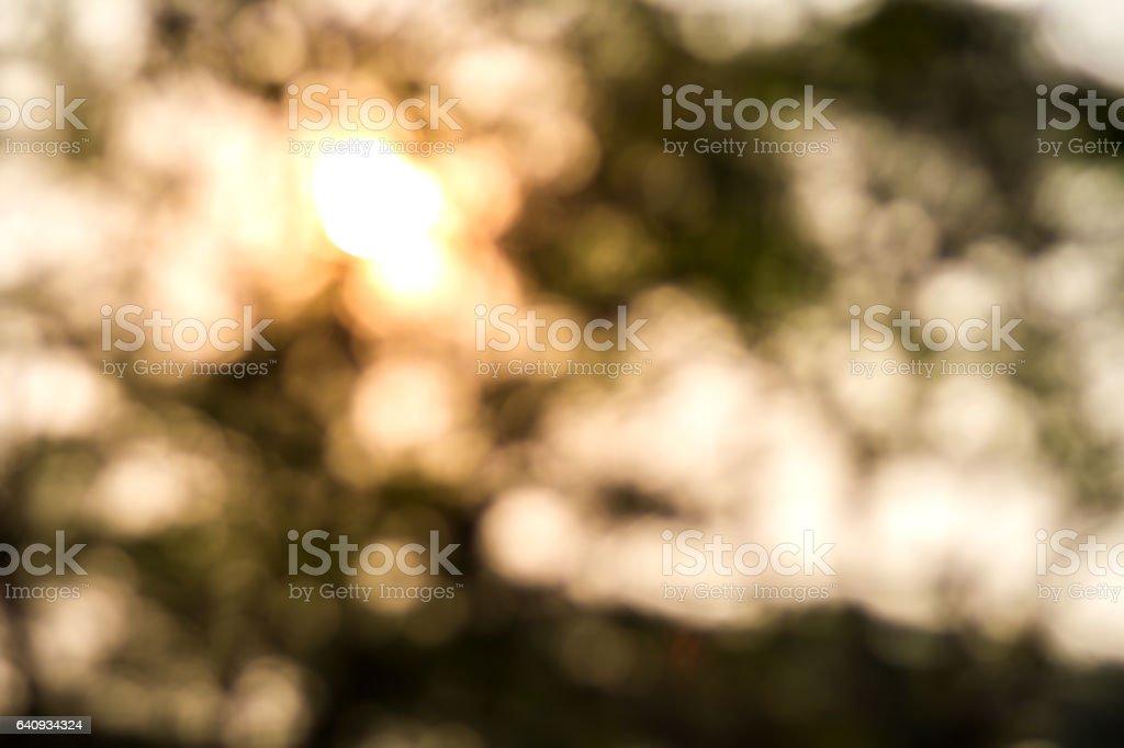 Blurred sunset and bokeh tree background scene stock photo