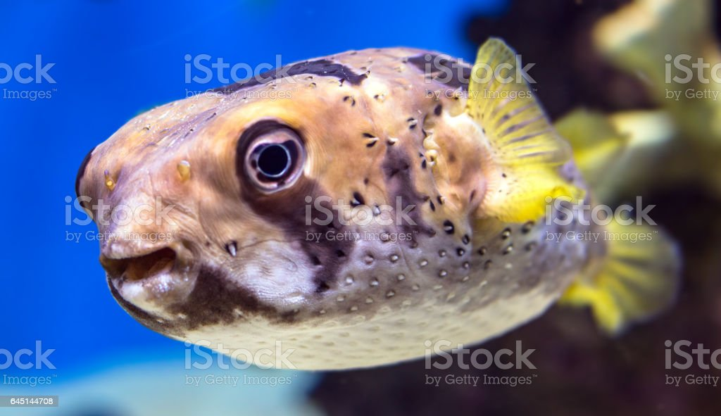 Blurred view of a curious dog fish in Moscow aquarium stock photo