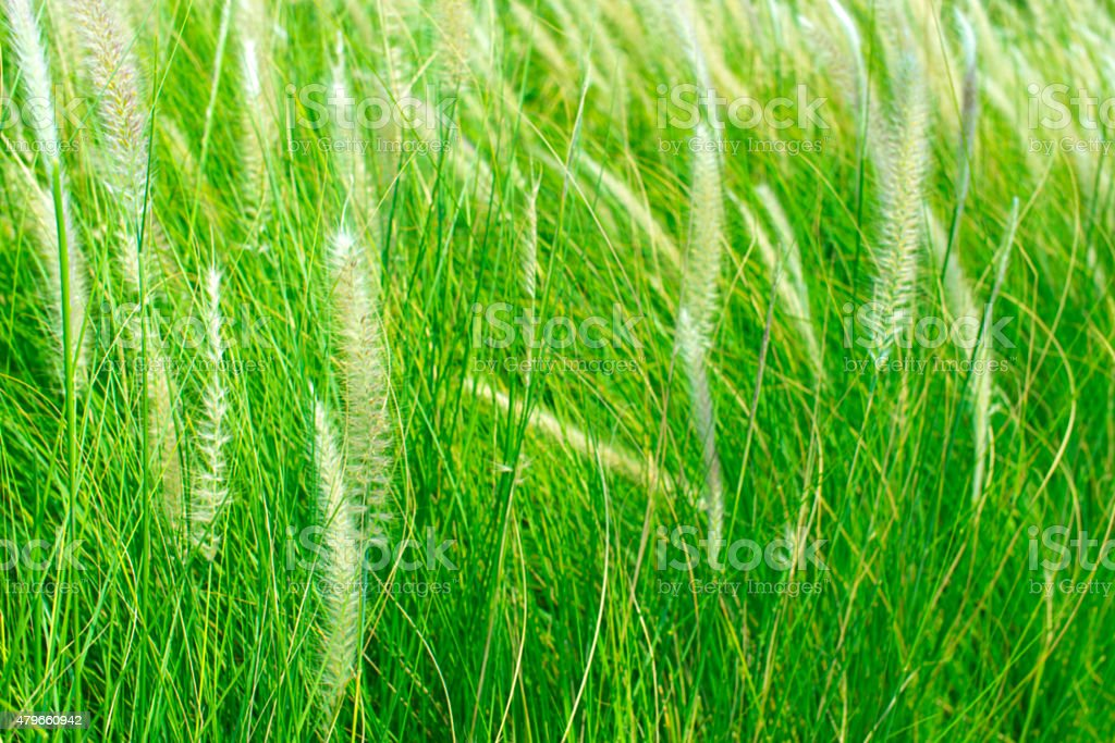 Blurry Image.  Wind flowers with green nature. royalty-free stock photo
