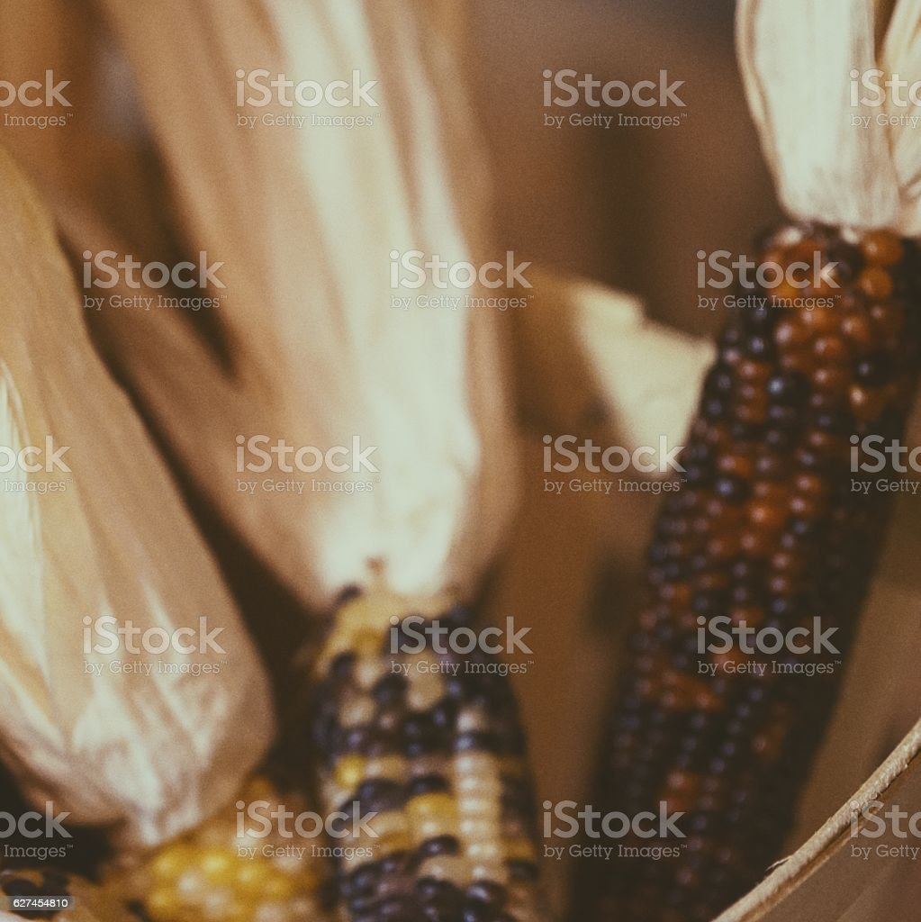 Blurry Indian Corn on the Cob Harvest Background stock photo