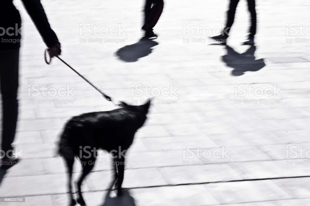 Blurry man walking a dog on a leash, silhouette from waist down stock photo